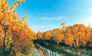 otoño-mendoza-viñedos