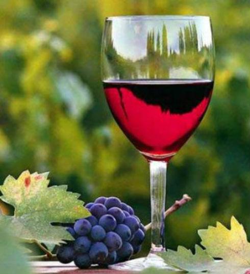 Enoturismo, a disfrutar de los buenos vinos argentinos