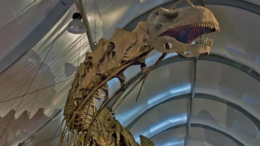 Turismo paleontologico, en busca de fosiles en Neuquen
