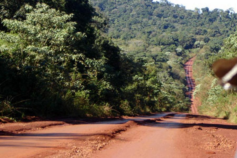 Un recorrido por la Selva Misionera