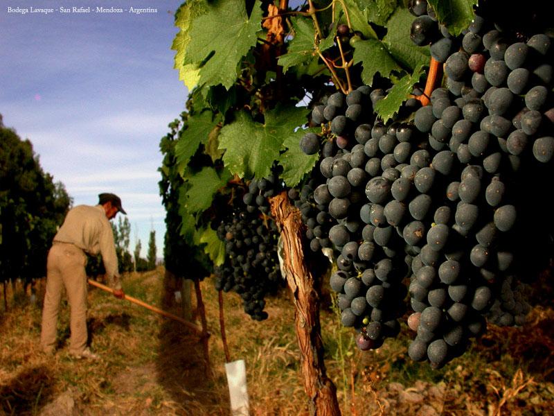 Camino del Vino de San Rafael