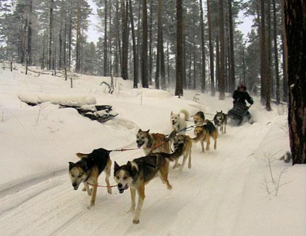 Paseos en trineo tirado por huskies, una costumbre ancestral también en Patagonia