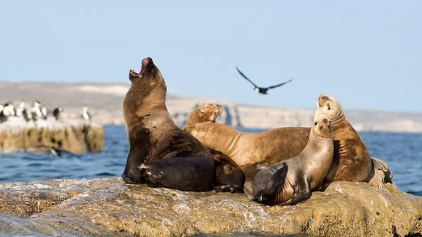 Nadá con lobos marinos en Puerto Madryn
