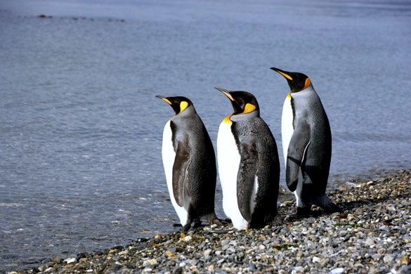 3 lugares maravillosos para conocer a los pingüinos