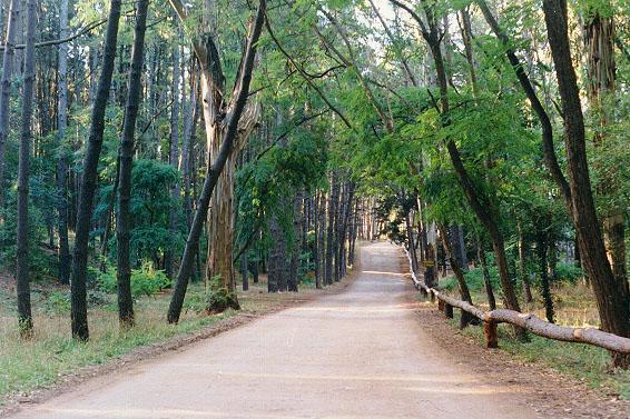 Recorré el Bosque de Miramar en bicicleta