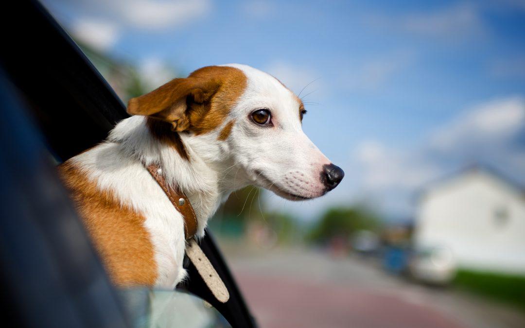 Lo que hay que saber cuando viajás con mascotas