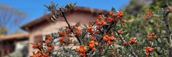 Cabaña Cabañas Araucarias - Casa Grande